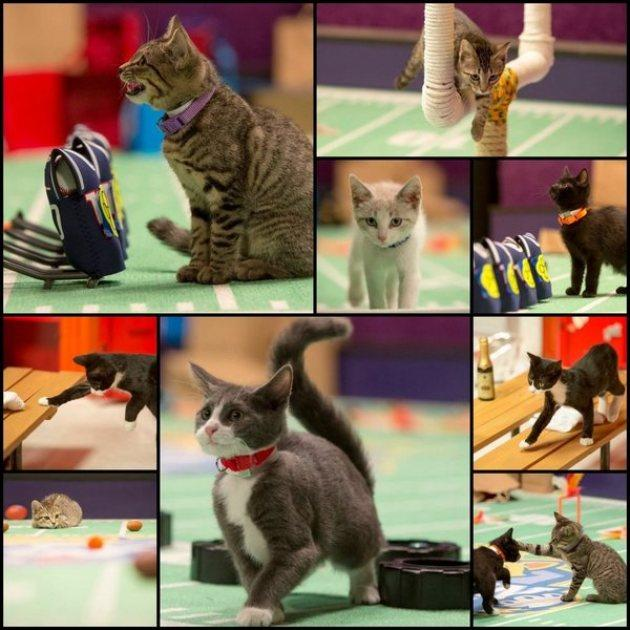 Get Ready For Super Bowl Sunday With Kitten Bowl II Preview