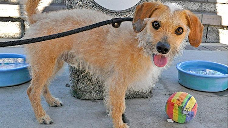 Pet of the week: 2-year-old terrier-mix named Gonzo