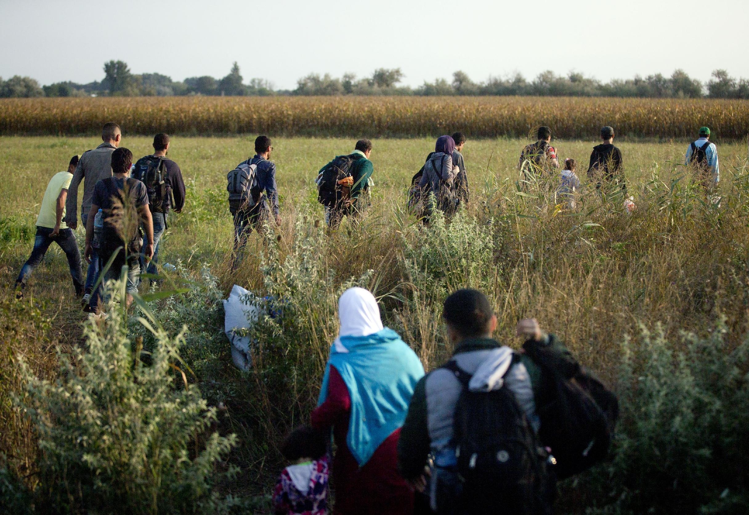 Letter from Hungary: Migrants seek EU's field of dreams