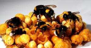 How Queen Bees Reign Over Reproduction