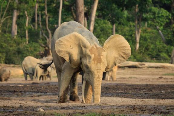 Armed Poachers Reportedly Raid African Elephant Sanctuary