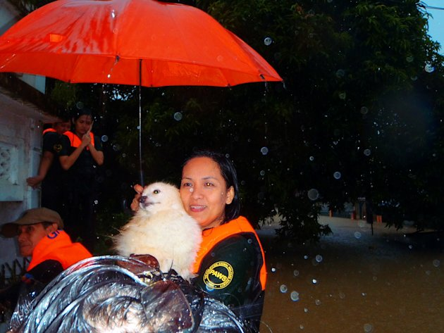 PAWS-volunteer-Riza-Calaguas-with-a-rescued-pet-from-Provident-Village-in-Marikina-jpg_085533 - About THE PHILIPPINE ANIMAL WELFARE SOCIETY - Directory Philippines