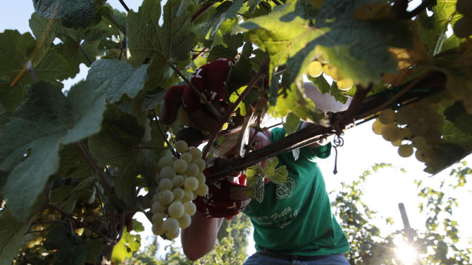 Italian vintners look abroad as home sales slump