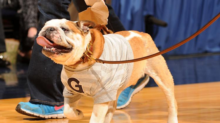 Georgetown Hoyas mascot Jack the bulldog