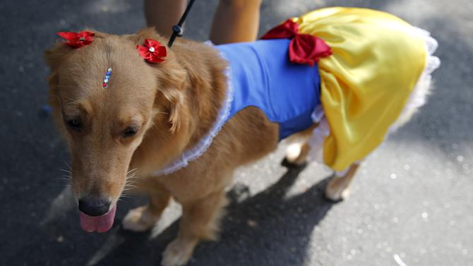 "A dog takes part in the ""Blocao"" or dog carnival parade during carnival festivities in Rio de Janeiro"