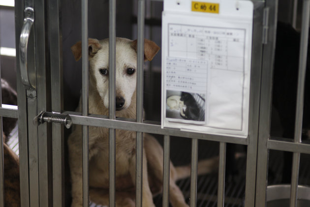 In this photo taken on Monday, April 9, 2012, a dog sits in a cage behind his paperwork before being put down by lethal injection at a government-run shelter in Taoyuan, northern Taiwan.  In an ongoin