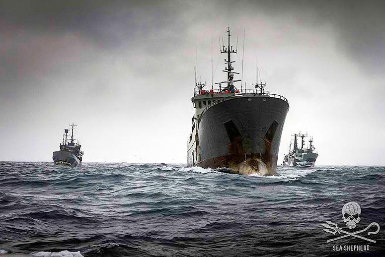 One of the World's Most Notorious Illegal Fishing Crews Is Fined $17 Million
