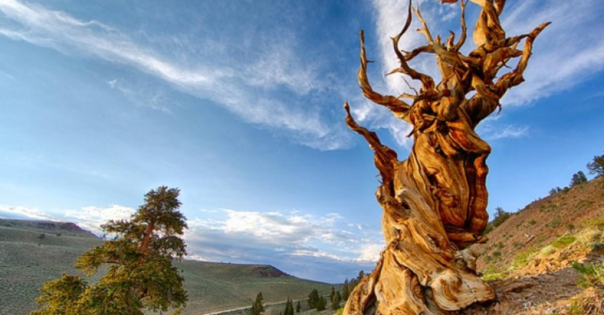 The 10 Oldest Living Things On Earth