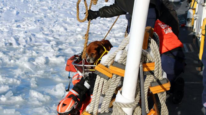 """In this Monday, March 3, 2014 photo provided by the U.S. Coast Guard, crew members assigned to Coast Guard Cutter Bristol Bay hoist aboard the ship a dog they found stranded on the ice of Lake St. Clair, Mich. The dog, who the crew later named """"Lucky,"""" was taken inside the ship, where it was provided food and care before before taking it to an animal shelter. (AP Photo/U.S. Coast Guard)"""