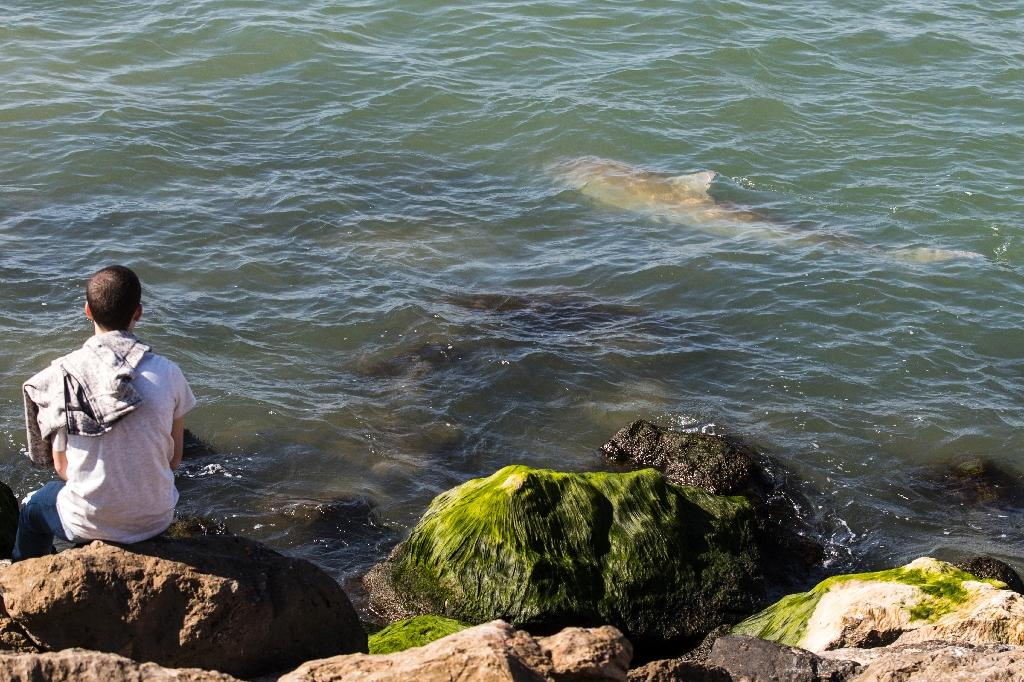 Sharks gather off Israel in pilgrimage to warm waters