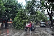A motorist tries to get round a fallen tree blocking a road in Shantou, Guangdong province, on September 22, 2013