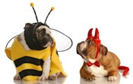 Looking for some fun Halloween costume ideas for dogs?