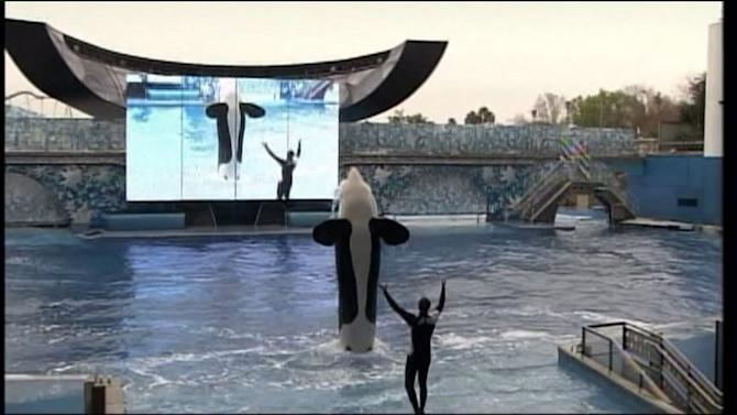Bill Aims to Ban Seaworld Orca Show