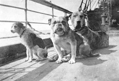 A photo of dogs on the Titanic. A dozen dogs were confirmed to be aboard; three small dogs survived. (Photo courtesy of Widener University)