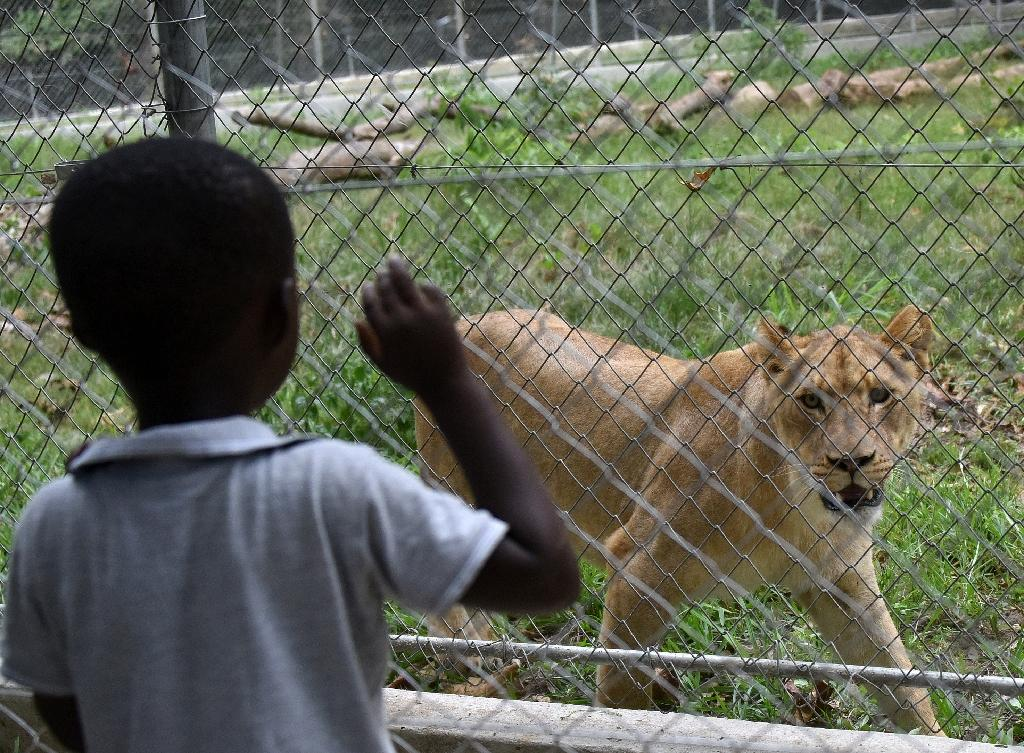 Zoo's new lions a 'sign' Ivory Coast is moving out of crisis