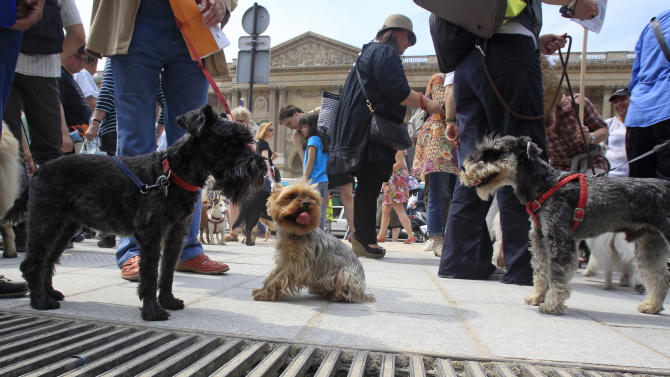 Dog owners gather behind the Louvre Museum in Paris prior to a march toward the Tuileries Gardens, Saturday June 8, 2013. At least 100 pooches with owners in tow, holding leashes marched near the Louvre at a demonstration to demand more park space and access to public transport for the four-legged friends. (AP Photo/Remy de la Mauviniere)