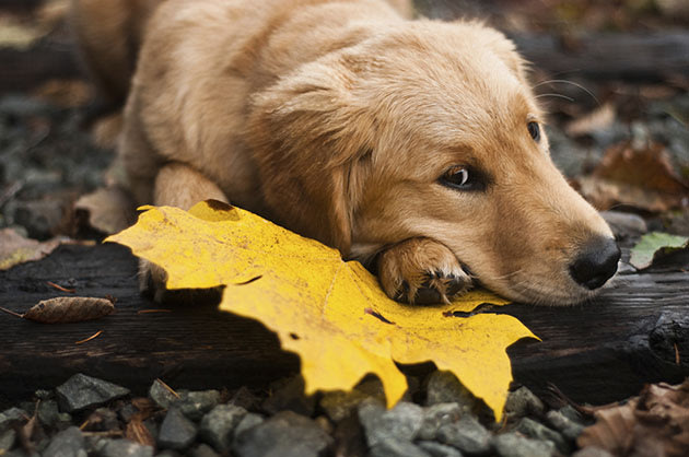 Dogs are good for you (Thinkstock)