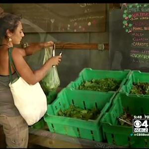 New England Seeing Surge In Younger Farmers