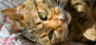 Purr therapy: The healing power of cats