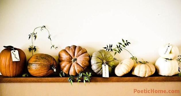 Assortment of Pumpkins