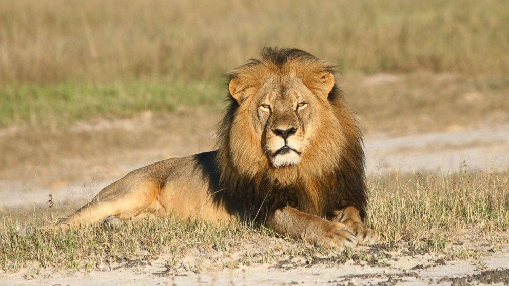Cecil the Lion's Brother, Jericho, Killed by Hunter, Zimbabwe Conservation Task Force Says