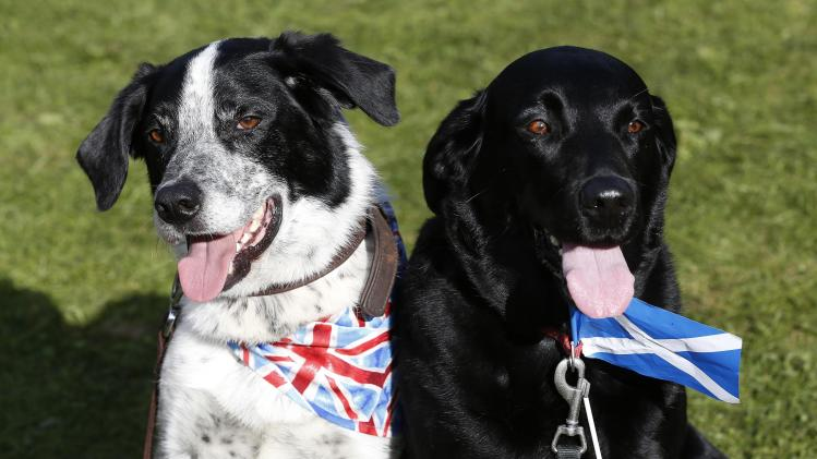 Dogs wearing a union flag and a Scottish Saltire are seen at the Birnam Highland Games in Scotland