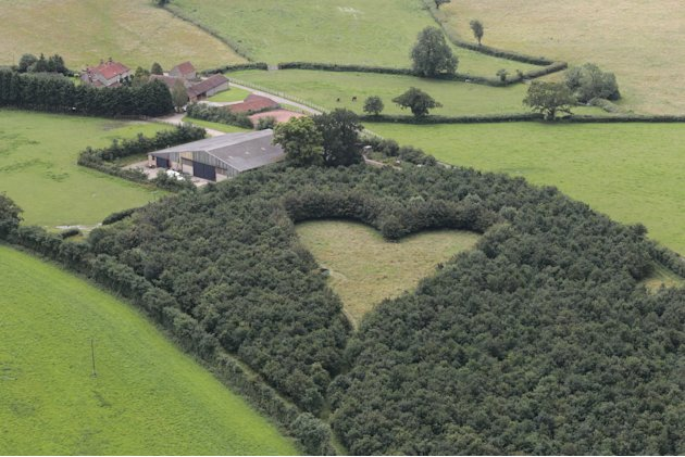 Heart field