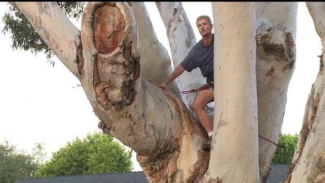 Tree Sitters Come Down After Talk With Mayor