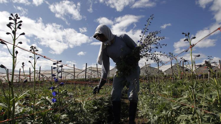 Ecuador flower growers in Snowden shock