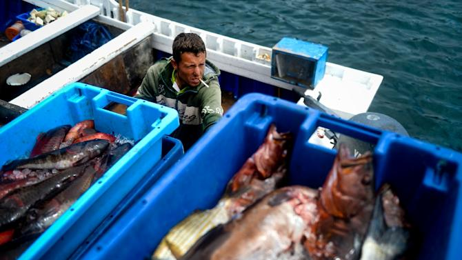 Stricter catch quotas proposed to protect decreasing Atlantic fish populations have the fishing industry in Portugal irate as the restrictions would apply to sardines, virtually the national dish