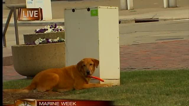 Marine Week live demonstration with dogs
