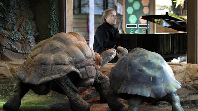 French pianist Richard Clayderman plays the piano to Galapagos tortoises Dirk, aged 70, and Polly, in an attempt to put the reptiles in the mood to mate, at London zoo, Thursday Feb. 7, 2013. (AP Photo/PA, Lewis Whyld) UNITED KINGDOM OUT  NO SALES  NO ARCHIVE