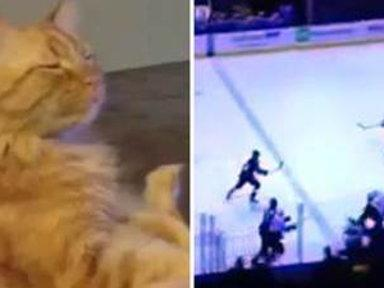 Ducks Fan Dave Is One Hockey-loving Cat
