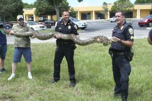 Handout of Port St. Lucie police officers displaying a captured 12-foot Burmese Python in Port St. Lucie