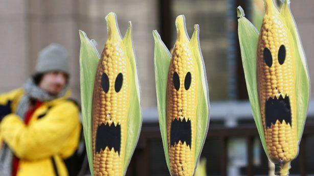 Other Scientists Are Skeptical of New Genetically Modified Corn Study