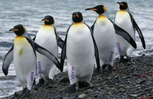Even the Penguins Aren't Really Sure Who's Who