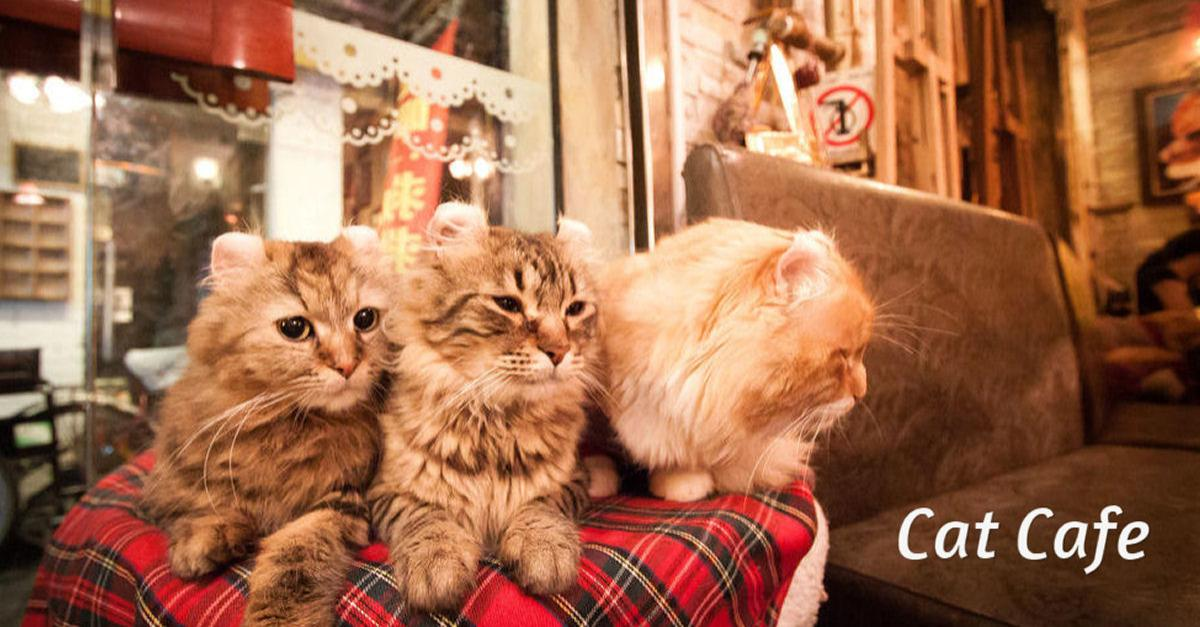 Are Cat Cafes Going Mainstream?