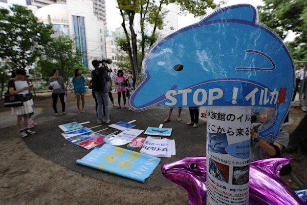 Dolphin hunting season kicks off in Japan