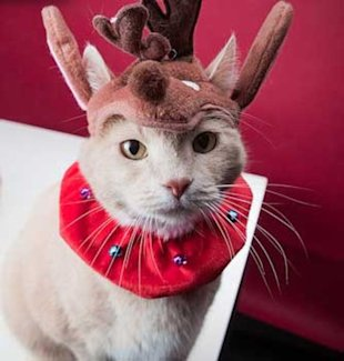 A Christmas kitty...