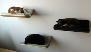 wall mounted cat beds