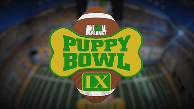 IntoNow Goes to the Dogs with Puppy Bowl IX