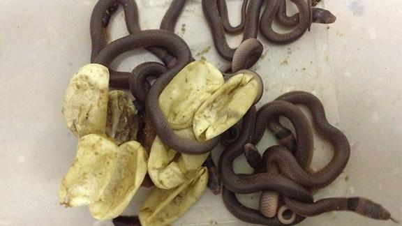 Deadly Snakes Hatch in Toddler's Closet