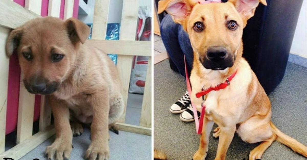 17 Before And After Pictures Of Shelter Pets