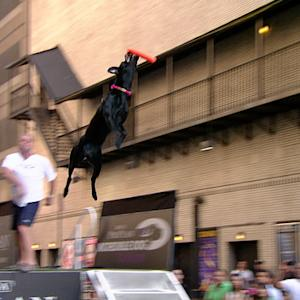 Dock Diving Dogs 2014 - David Letterman
