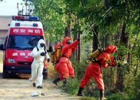 'Killer hornets' kill 42 in China