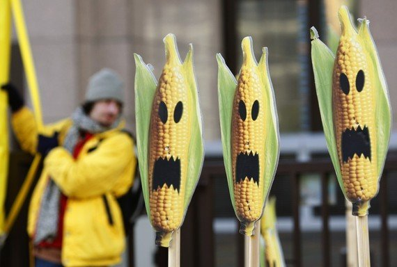 Corn_GMO_Genetically_Modified_Halloween_Reuters.jpg