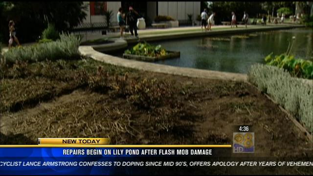 Repairs begin at Lily Pond after flash mob damage