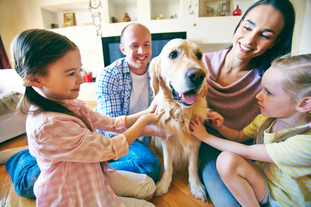 Having a dog reduces anxiety in kids