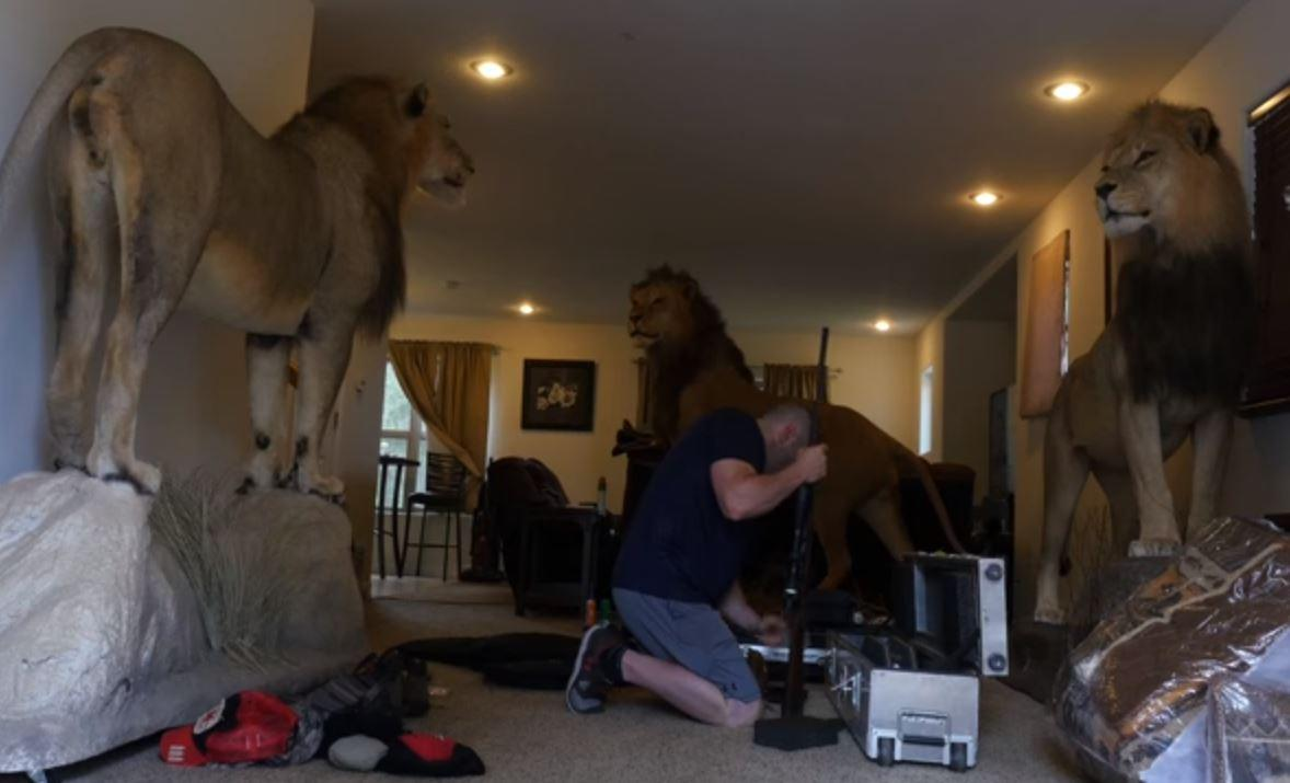 'King Of Beasts' Trailer: Lion Trophy Hunting Docu Questions Where Savagery Truly Lies