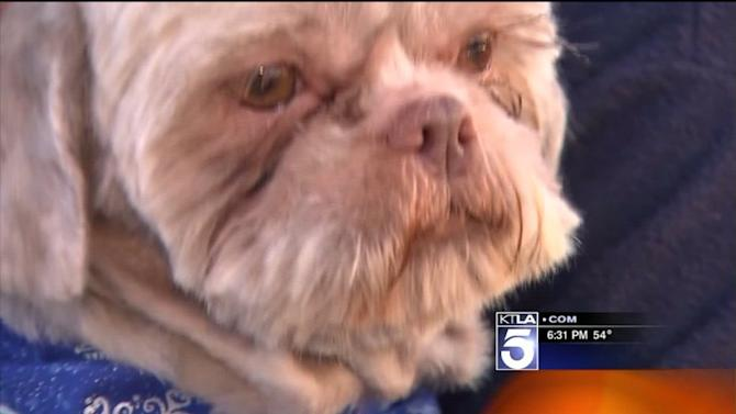 Animal Rescuers Search for Person Who Left Dog at San Fernando Walgreens Parking Lot Christmas Eve